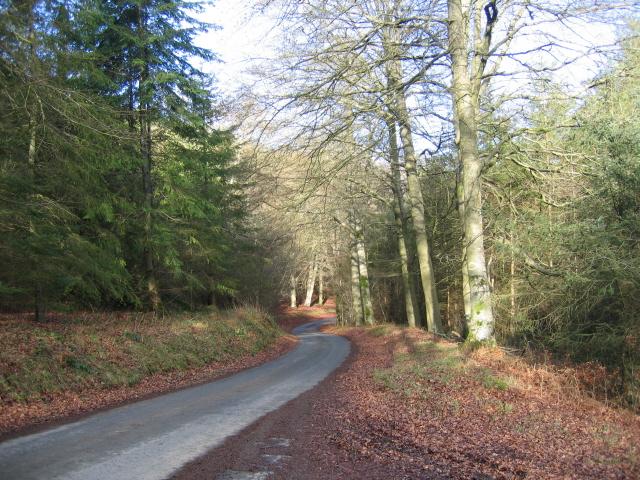 Brycheiniog Forest