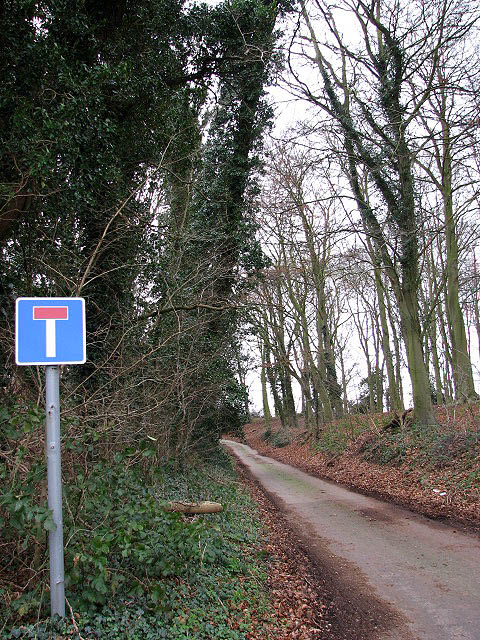 Dog Lane