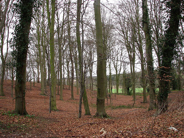 Beechwood at the edge of Westlodge Hills