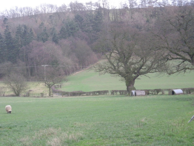 'Shropshire Way' to Natal Coppice