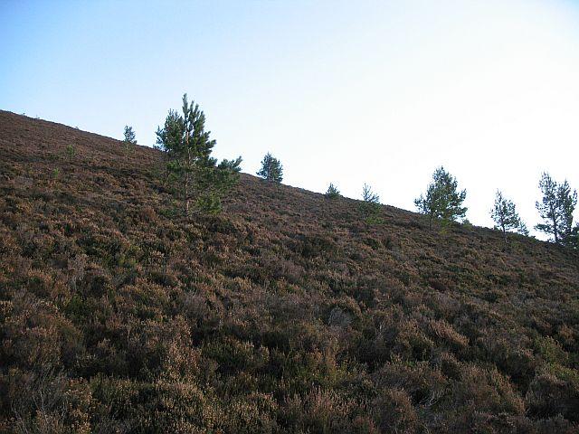 Scattered pines, Glack Harnes