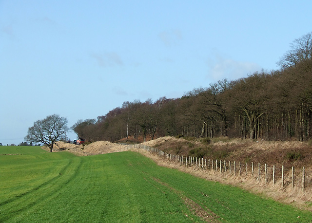 Field Boundary near Halfpenny Green, Staffordshire