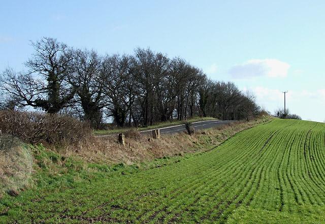 B4176 and Crop Field near Halfpenny Green, Staffordshire