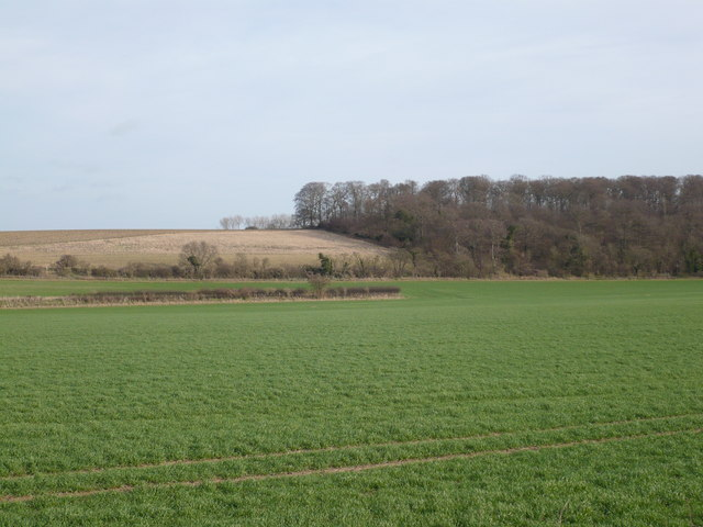 Bushey Rough from Crockshard Hill