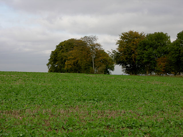 Field east of Ladle Hill