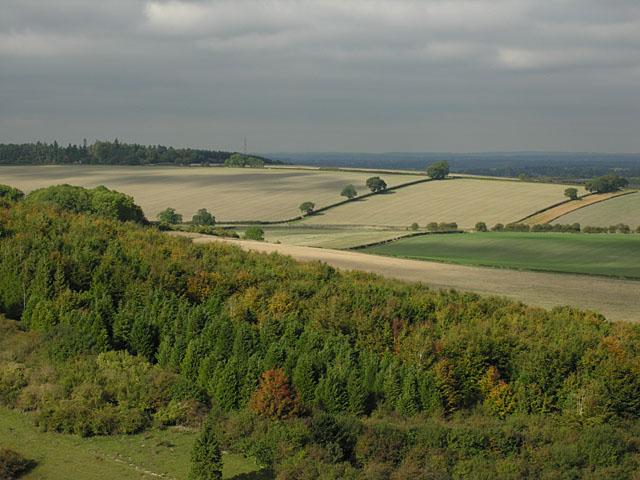 Woodland north of the Warren