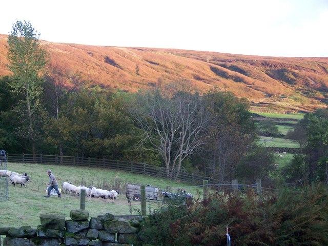 Bilsdale Moor