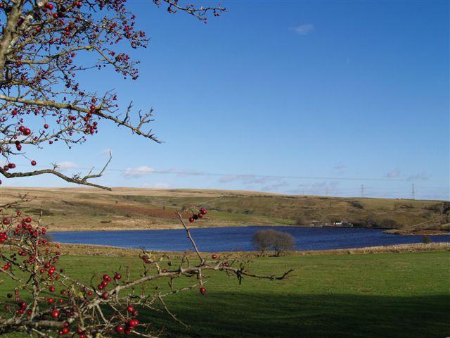 Shon-Sheffrey's Reservoir