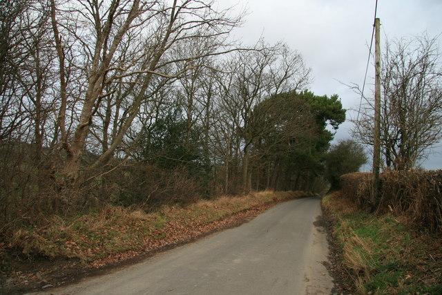 Lane beside Cae'n Coed Dingle