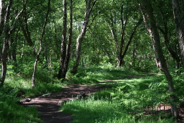 Shaded Path
