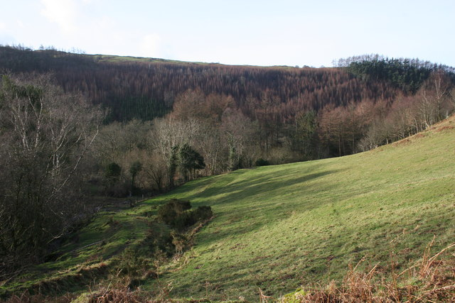 In the Llyfnant valley