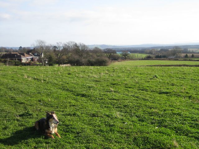 Fields On Southern Edge Of Yeovil