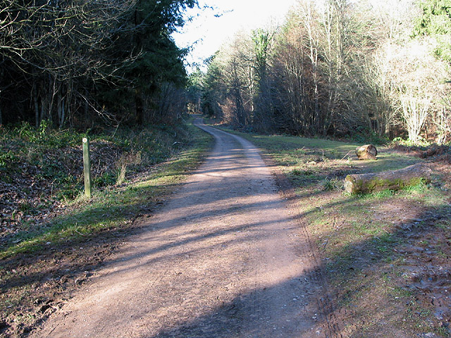 Track heads NW through Queen's Wood