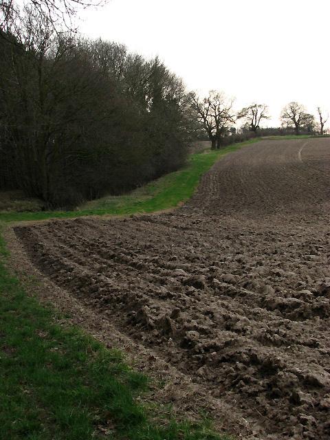 An irregular field-woodland boundary