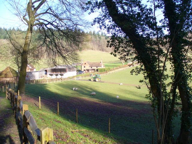 Grazing at Colekitchen Farm