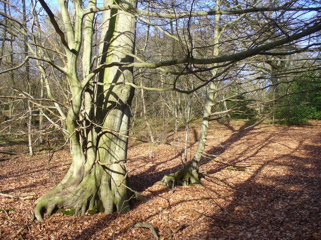Great Kings Wood