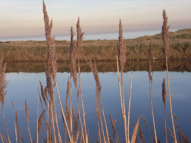 View across Beacon Ponds