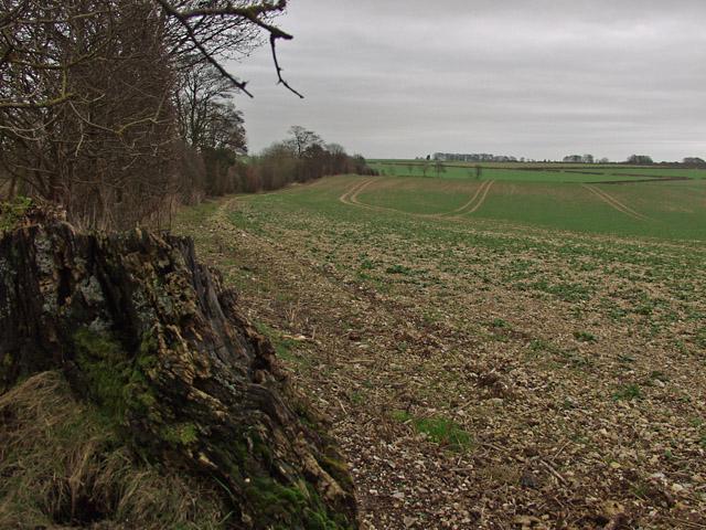 Towards Melton Bottom