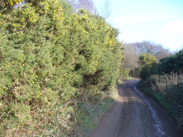 Byway on Hackhurst Downs