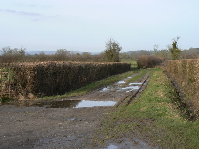 Green lane at Barton Lower Farm