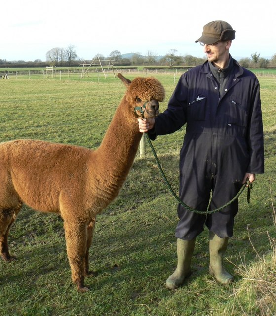 Pastureland used for alpacas