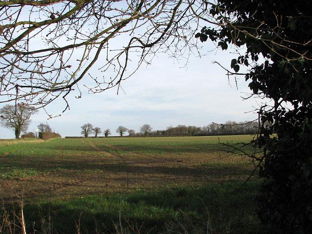 Field beside Norwich Road