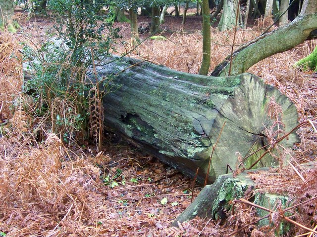 Tree trunk near Fritham Plain