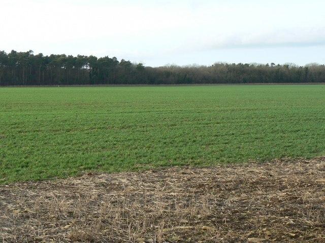 Field and Lockyer's Wood near Charlton Mackrell