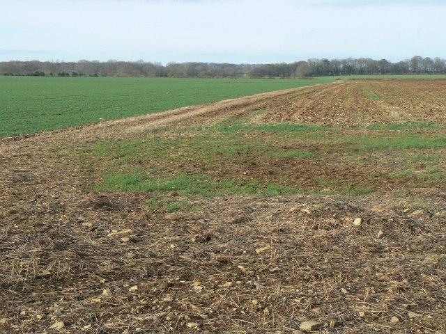 Field near Charlton Mackrell