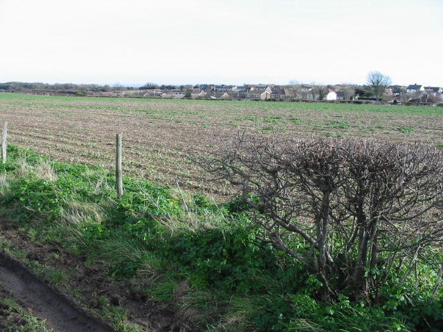 View across the fields from bridleway