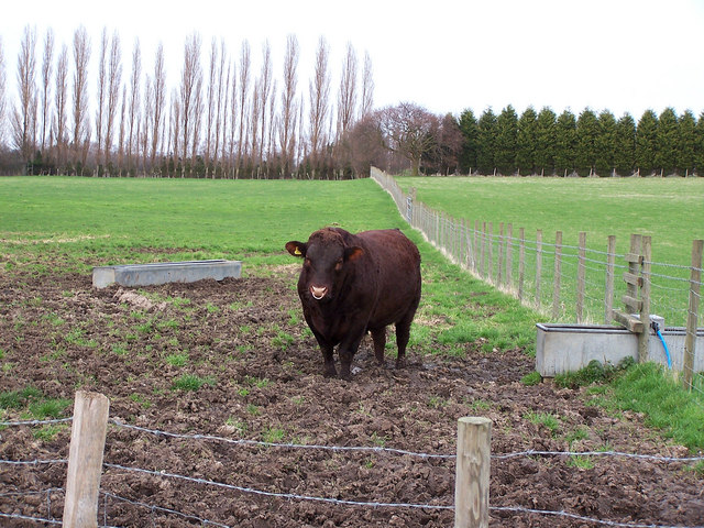 Beware of the bull