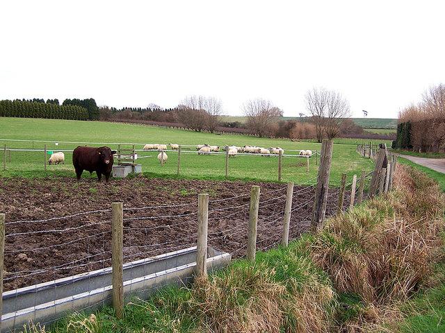 Elm Farm, Lower Halstow