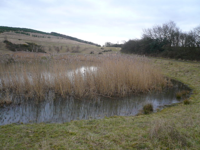 Silverhill Wood Country Park Pond