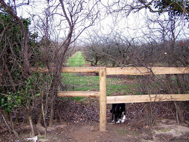 Footpath through orchard