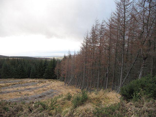 Former vegetation boundary