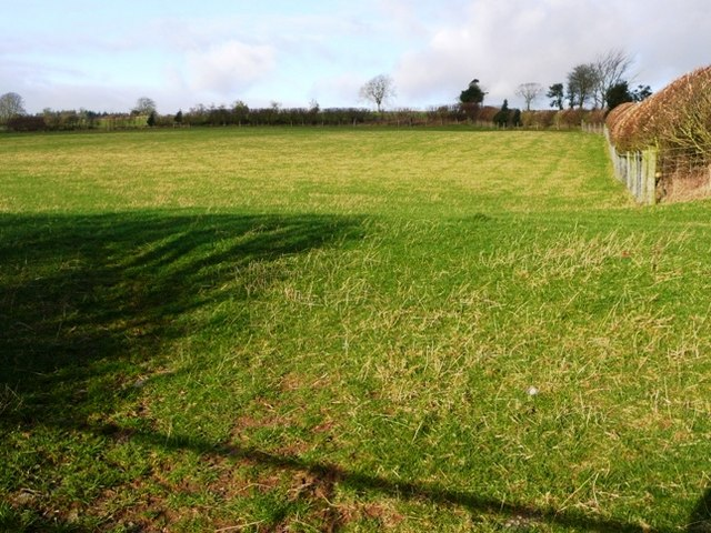 Sheep pasture near Lane Farm