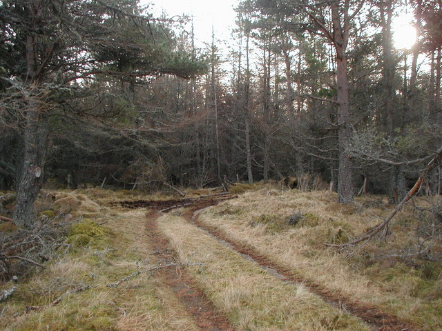 Track going into the forest on Corlich Hill