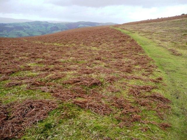 Footpath to Aberedw Hill