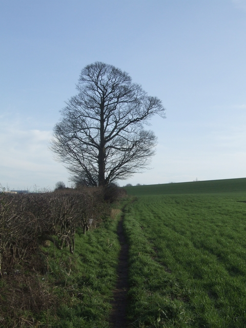 Tree on the Forest of Mercia Way