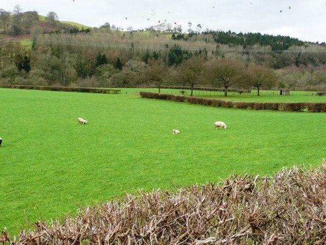 Wye valley opposite Little Hall