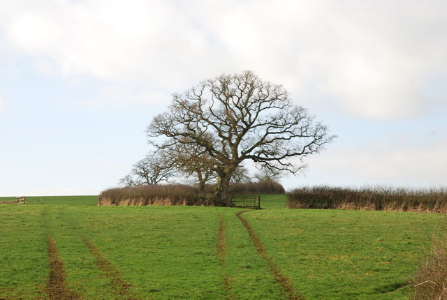 Fields near Blackwater Bridge