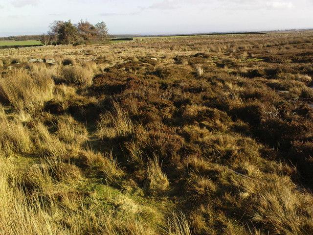 Skelding Moor