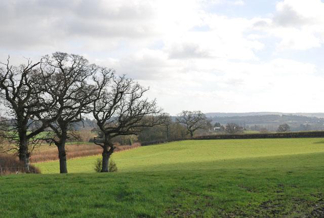 Farmland next to Stalbridge Lane