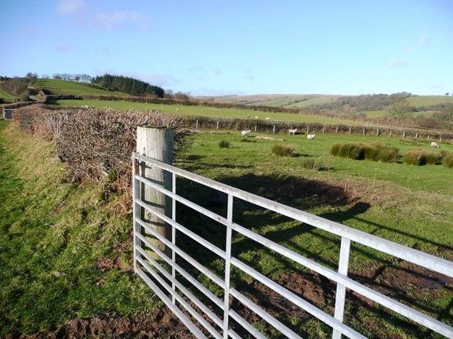 Sheep pasture above Cefn-y-garth