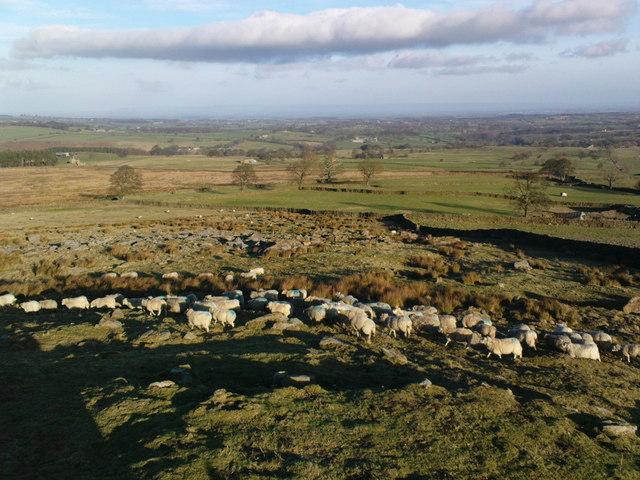 Rocks and Sheep