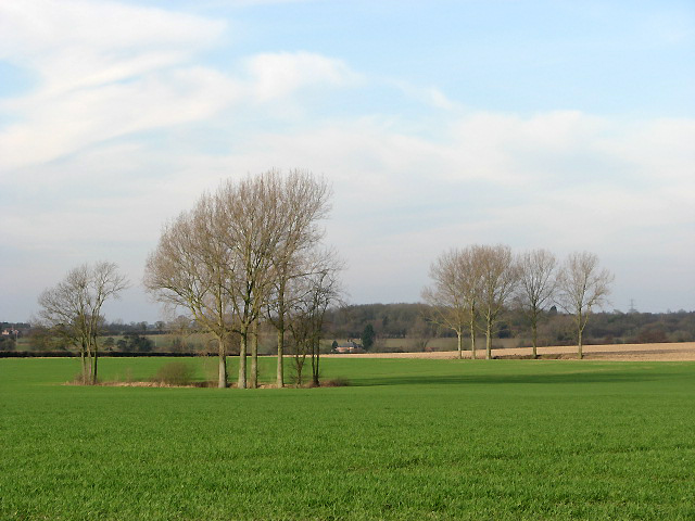 Fields with trees