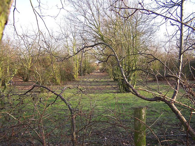 Derelict orchard