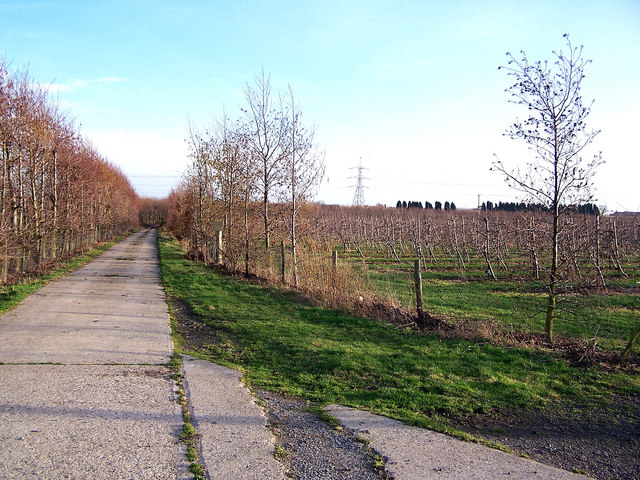 Track between orchards