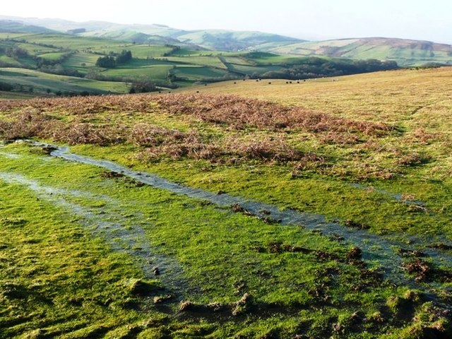 Stream catchment west of Banc y Celyn