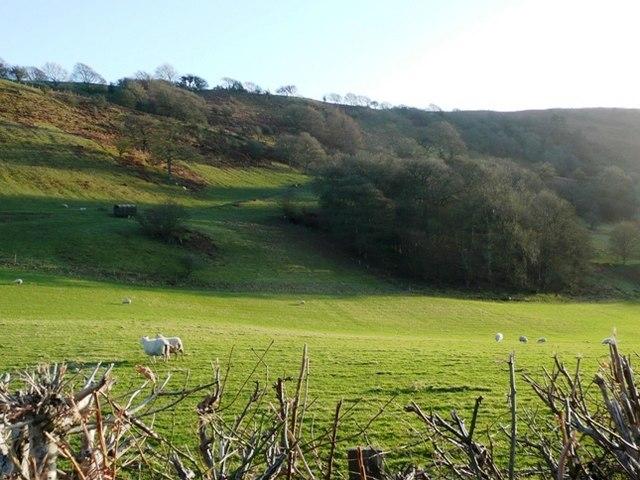 Near Pwllgwyn
